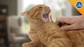 You're Petting Your Cat All Wrong!