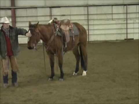 King Dak, 2007 Quarter Horse Gelding For Sale