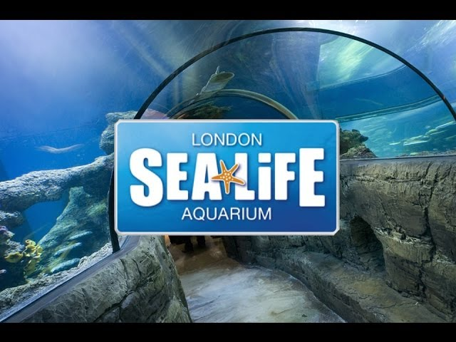 London Aquarium 2 For 1 Deal Free Tours By Foot
