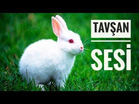 tavşanların sevdiği muzikler , tavşan rahatlatma uyutma müziği  (reklamsız)