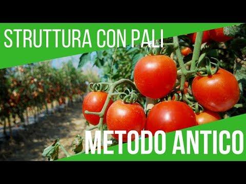 Trapianto pomodori a parma doovi for Trapianto pomodori