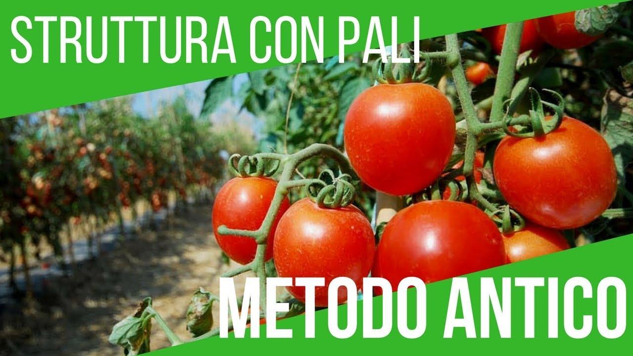 Come coltivare i pomodori sostegno concime trapianto for Trapianto pomodori