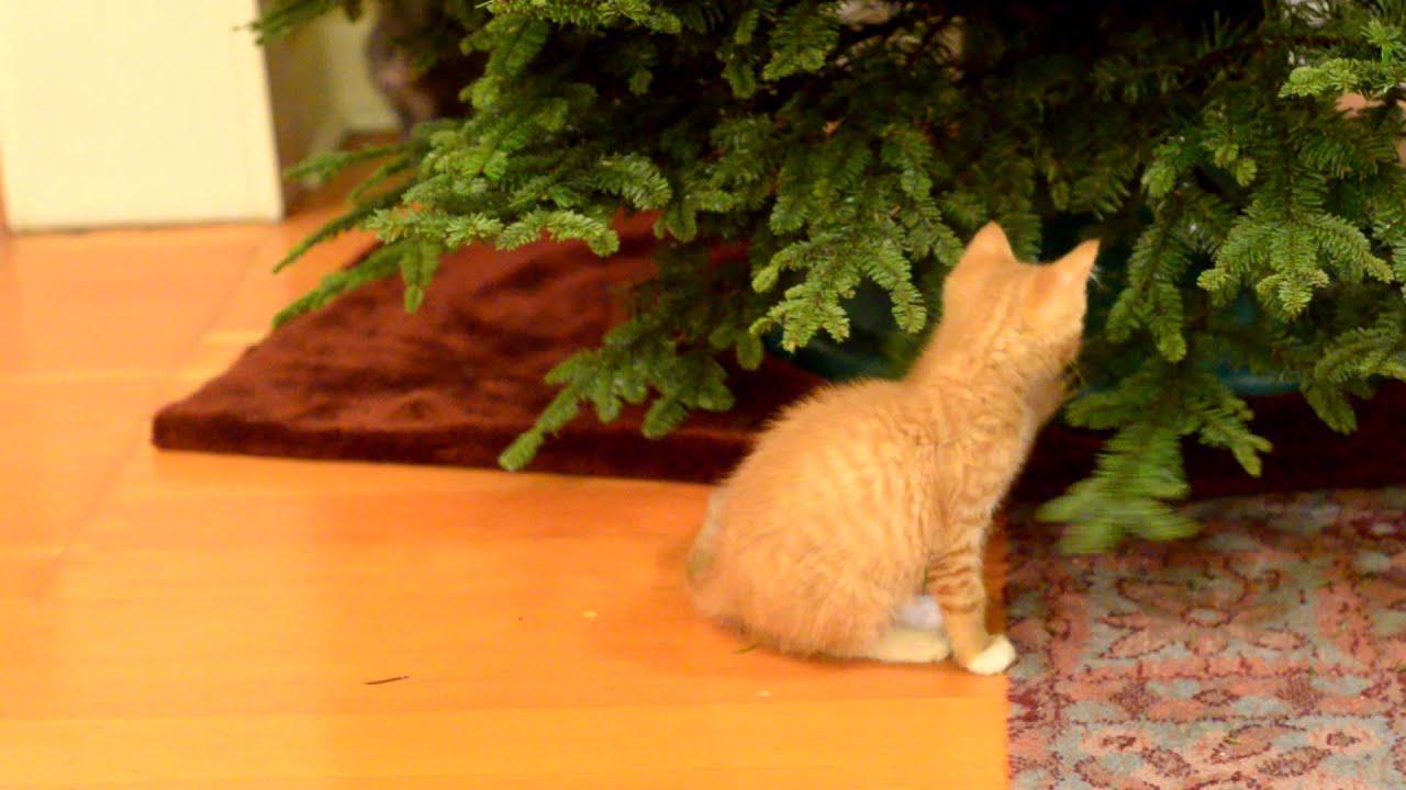 OH, Christmas Tree pt 2 - YouTube