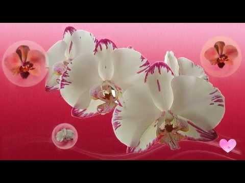 ✿=ОРХИДЕЯ= Магический цветок любви✿ ♥♫