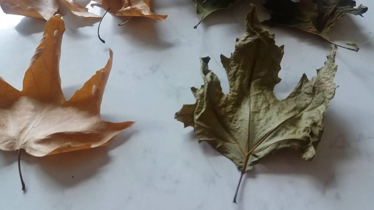 Çınar Yaprağı Örneği Yapılışı