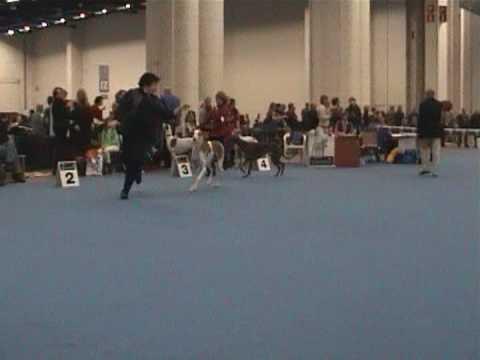 13.-14.12. HELSINKI, VOITTAJA 2008- greyhound BOB