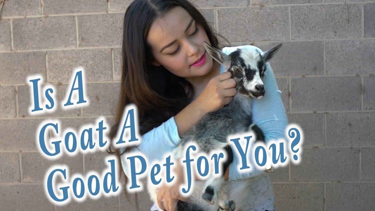 R Goats Good Pets Goats As Pets |...