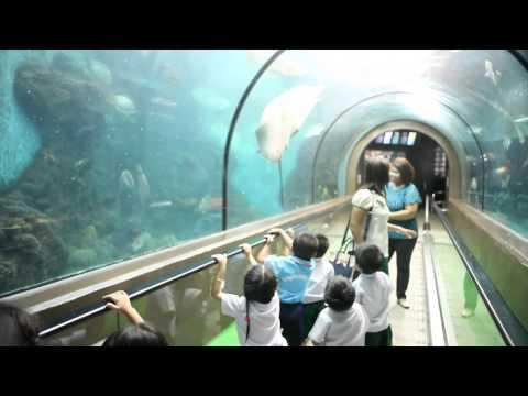PRE-K KIDS AND K2+K3 Filed trip to Phuket Aquarium