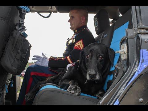 Celebration of life for military service dog Cena