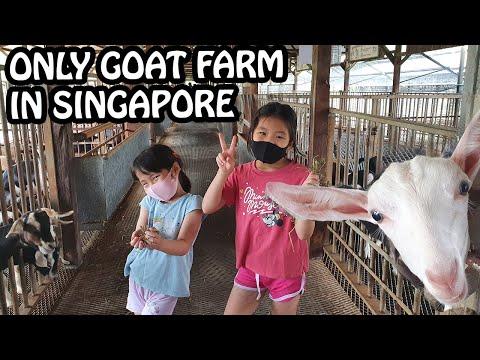 Singapore Goat Farm & Bollywood Veggies