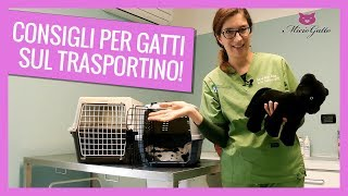 Traveling with the cat: the advice of the vet on the carrier 🛫