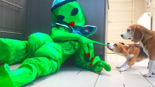 Dogs Vs Giant Alien Prank : Funny Dog Louie The Beagle