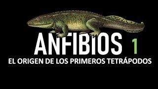 Herpetología #1: Anfibios - El Origen De Los Primeros Tetrápodos