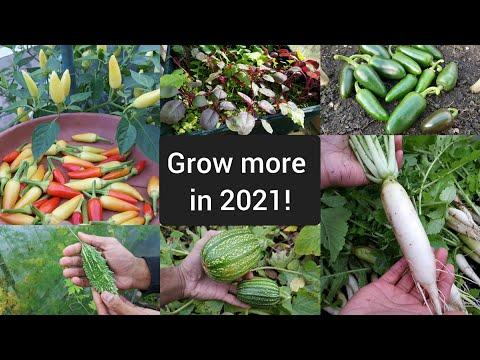 Must grow fruit & vegetables in 2021 – allotment update – edible garden – shokher bagan