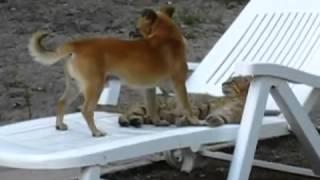 Собака вылизывает кота! Fun! youtube original