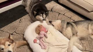 Giant Dogs Protect Sleeping Baby! (Cutest Ever!!)