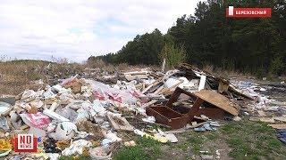 Несанкционированная свалка под Березовским. Мертвые собаки и ртуть