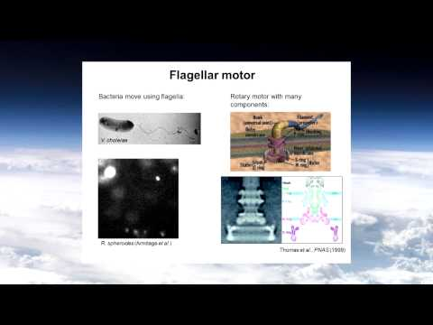 Michael Woodside Promise and Perils of Nanotechnology Part II Winter 2013
