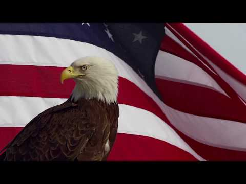 WAVING AMERICAN FLAG WITH BAD EAGLE