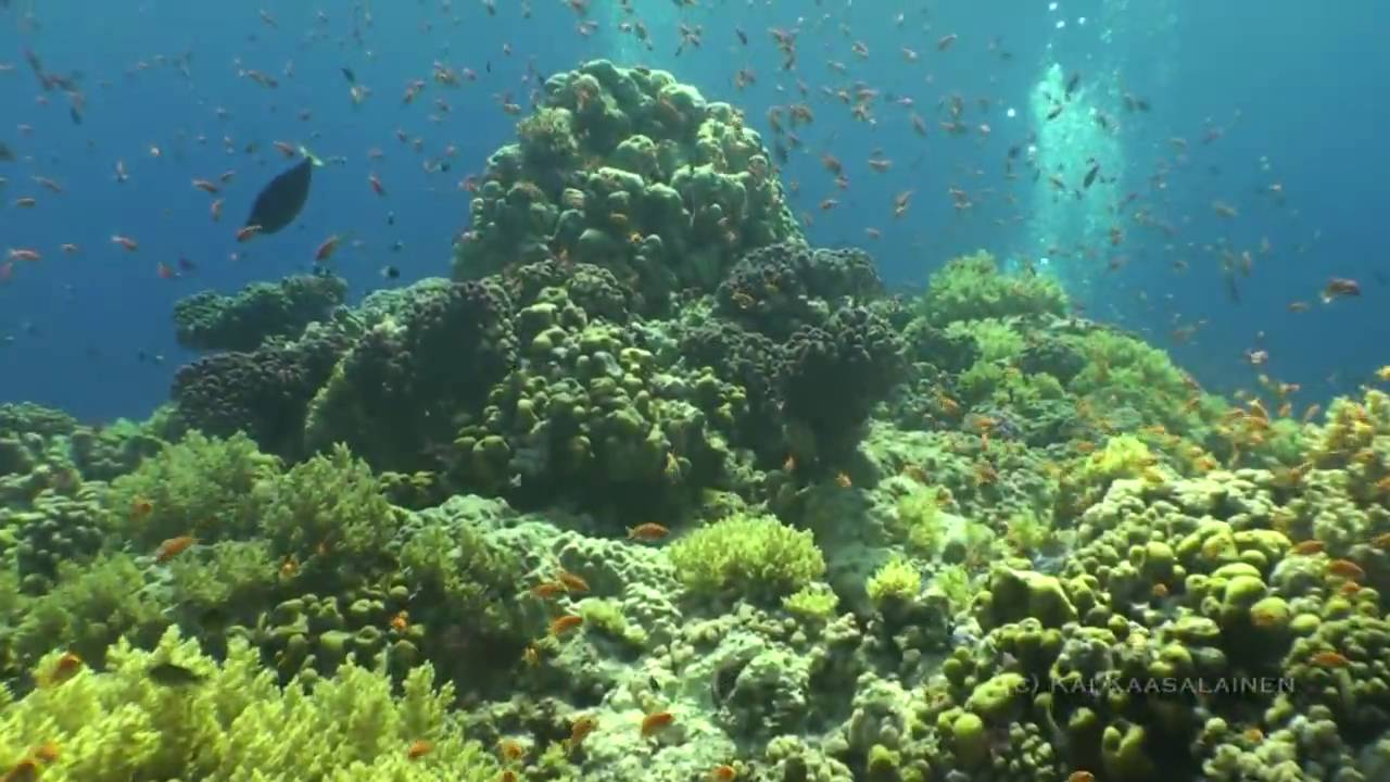 Greatest Underwater Views of Red Sea! - YouTube