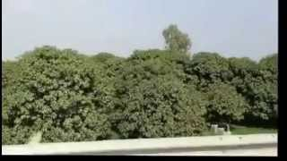 Multan Mango Orchards roadside view on motorcycle