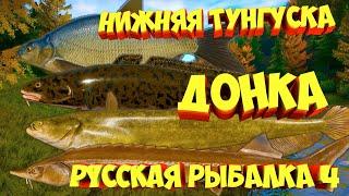 русская рыбалка 4 Донка река Нижняя Тунгуска рр4 фарм Алексей Майоров russian fishing 4