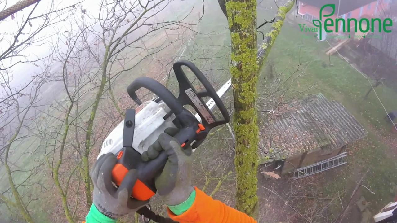 Periodo Migliore Per Potare Quercia potatura in tree climbing quercia rubra - vivai pennone alessandria