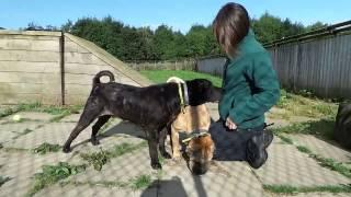 Dogs Trust West Calder: Dexter & Frankie