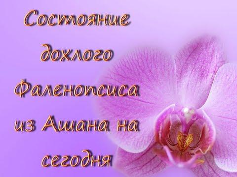 - Орхидеи и все для орхидей