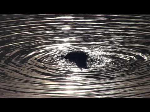 Canon HF G20 Test footage  Richard A. Rutkowski Park, Bayonne