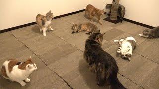6畳の部屋に猫の爪とぎを敷き詰めました。爪をとぎ放題。床全体が爪と...
