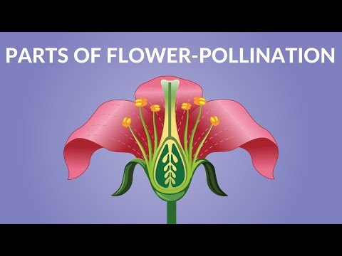 Parts Of Flower    Pollination Video   Video For Kids