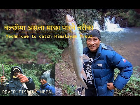 Nepal river fishing/ Current water fishing Nepal/ Himalayan Trout Fishing/ Fresh water river fishing