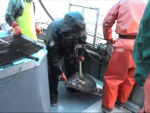 Halibut Fishing Trip - Hoonah