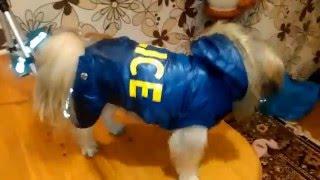 Зимний Комбинезон для Собаки с AliExpress.Цена 7.5 $