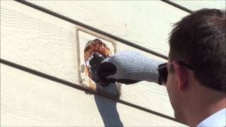 Small Bird Nest Removal...from a bathroom exhaust vent