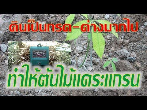 ดินเป็นกรด-ด่างเกินไป ทำให้มะนาวหรือพืชแคระแกรน ไม่โต ต้องแก้ไข I เกษตรปลอดสารพิษ