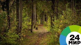 С начала сезона в лесах Беларуси заблудились 30 человек - МИР 24