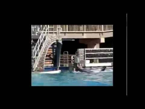 California Travel Destinations and Attractions | Visit SeaWorld San Diego California Travel Part 6