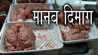 Human Brain Part 2