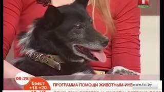 Программа помощи животным-инвалидам