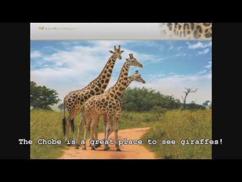 Africa Safari and River Cruise 2019