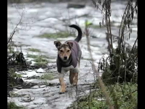 Запорожский собачий приют. Фото STomko
