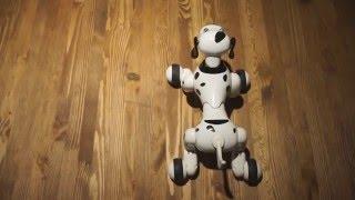 Видео-обзор робота-собаки HappyCow Smart Dog