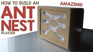 how to make an ant nest