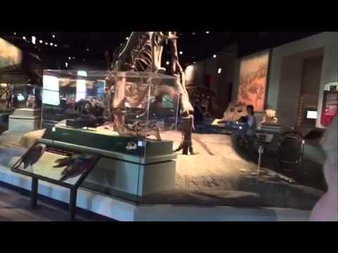 Field Museum - HW