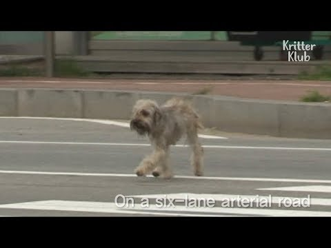 Stray dog And Her Puppies Rescued From The Roadside | Kritter Klub