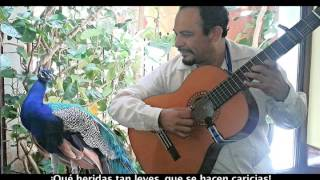 Dulce Agonía (Rafael De Pau-Felipe García) Trova Yucateca