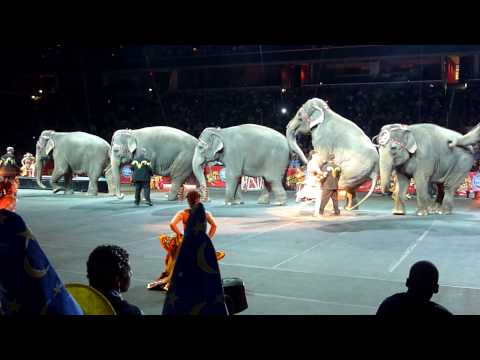 Elephants at the Ringling Brothers Circus in the Verizon Center Washington DC