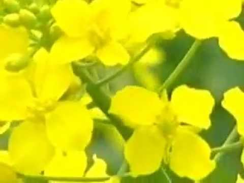 Tours-TV.com: Agriculture in Wujiang